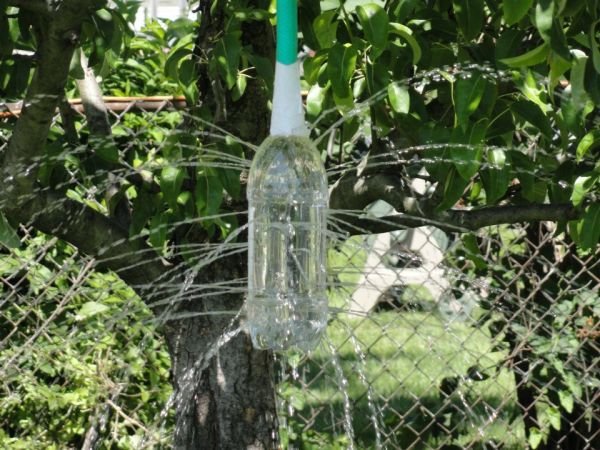 Botella árbol